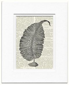 kelp frond dictionary page print