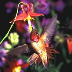 los colibries son mágicos