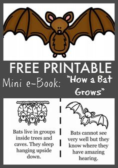 """this FREE printables e-book & coloring sheets for kids """"How a Bat Grows"""" is perfect for cave exploring, back to school lessons, and paired with Stellaluna crafts!"""