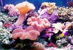 soft shades of oranges and pinks found in a healthy coral reef