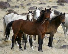The Wild Ones Photograph by Gene Praag - The Wild Ones Fine Art Prints and Posters for Sale
