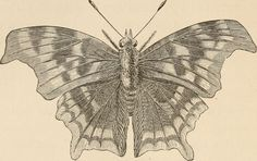"""Image from page 111 of """"The butterfly hunters"""" (1868) 