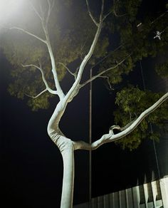 stunning image, even if it is a bad pruning job.