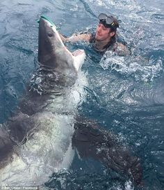 A man who came face-to-face with the jaws of a great white shark grabbed its nose in an attempt to sedate the beast in the midst of an attack (pictured)