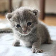 Kittyy