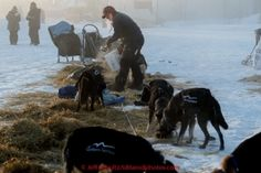 Martin Buser feeds his dogs just prior to leaving after his 24-hour layover in the morning at the Huslia checkpoint on Saturday  March 14, 2015 during Iditarod 2015.  (C) Jeff Schultz/SchultzPhoto.com - ALL RIGHTS RESERVED DUPLICATION  PROHIBITED  WITHOUT  PERMISSION: Martin Buser feeds his dogs just prior to leaving after his 24-hour layover in the morning at the Huslia checkpoint on Saturday  March 14, 2015 during Iditarod 2015.  (C) Jeff Schultz/SchultzPhoto.com - ALL RIGHTS RESERVED…