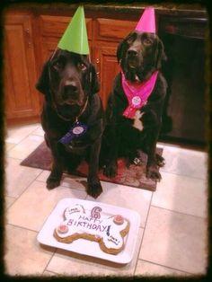 レシピとお料理がひらめくSnapDish - 16件のもぐもぐ - Even my pups need a homemade birthday cake!!! by chef_MelissaW