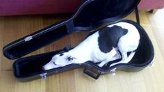 Whippet found a new bed.....perfect fit :o)