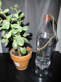Így locsold a növényeidet, ha elutazol - Ripost
