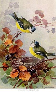 CATHERINE KLEIN  11/4/1861 -- 1929  ...   from Berlin .... Germany ....   . Птицы.: ♥ Creative NN. Блог Альбины Рассеиной. ♥