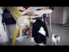 Come calmare un cane in presenza di un bambino su un seggiolone - YouTube