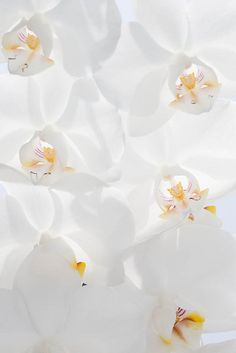 Orchid blooms Most Beautiful Flowers, All Flowers, Colorful Flowers, White Flowers, Baby Orchid, Orchid Varieties, Orchidaceae, Love Garden, Foliage Plants