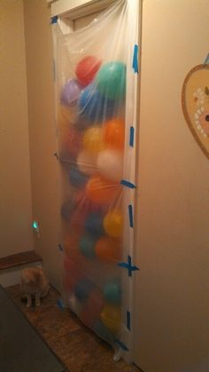 Birthday morning balloon surprise, for Doug's 16th. The cat was very confused. :)