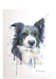 Pet portrait in Watercolour, pen and ink. Medium size. Border Collie.