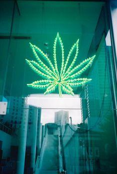 Weed   Cannapeople   4:20  Marijuana