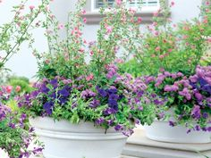 Outdoor Plant Arrangements | found some very interesting and attractive Ageratum containers while ...