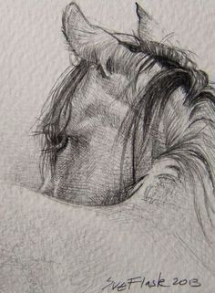 Sketches, sketches of horses, horse sketch, animal sketches, horse face dra Horse Pencil Drawing, Horse Drawings, Pencil Art Drawings, Animal Drawings, Drawing Sketches, Sketching, Realistic Drawings Of Animals, Pencil Drawing Tutorials, Drawing Ideas