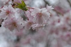 2012.Apr.Utatuyama Kanazawa Japan