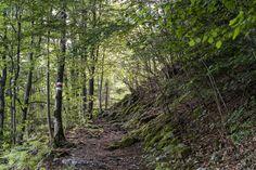Risletenschlucht: schöne Wanderung am Vierwaldstättersee - Wandertipp Entlebucher, Plants, Waterfall, Road Trip Destinations, Vacations, Nice Asses, Planets