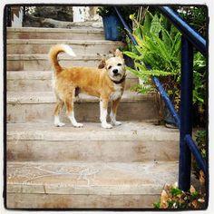 #dog#stairway#grancanaria#mogan#puertodemogan#instagram#ig#igers#photooftheday - @michaelwedin- #webstagram
