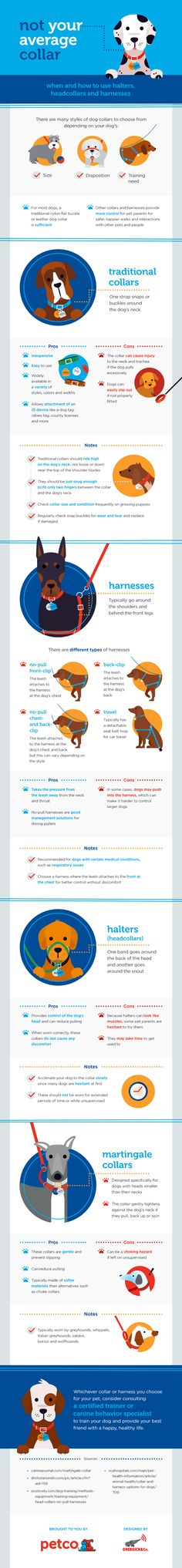 There are many styles of dog collars and harnesses to choose from depending on your dog's size, training needs and disposition. Use this guide to help you determine the right collar or harness for your pet.   Shop Petco.com for a wide assortment of collars and harnesses.