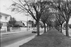 Década de 50 - Avenida Rebouças, sentido bairro de Pinheiros.: Avenida Rebouças
