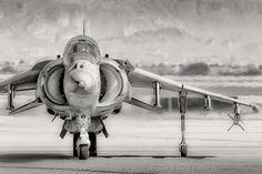 Offset Harrier Revisited - 2011.10.28 by Jeff D. Welker, via Flickr