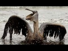 Black Tears:  The saddest video in the world - BP killed the planet - 2 ...
