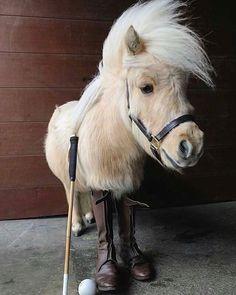 😍🐴😍Now this is just one pic I had to share - don't you agree !!!😍🐴😍 📽@horsefully #lovemyhorse #horsetagram #horsestagram #viralhorses #horsephotography #horses_of_instagram #horselovers #horselove #instahorses #horseaddict #horsephotographer #equus#equines #equestrians #equinephotographer #equinephotography #equinelove #tophorse #fanofhorses #beautifulhorse #ilovehorses #ridinghorse #horsetack #horsetee #dressagepony #horseworld #horsepictures #cutehorses #funnyhorse #horsefacts