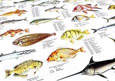 Southern Seas Fish