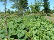 Franklin Community Garden - Tacoma