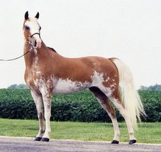 """This horse's whole attitude just says """"look at me, now at yourself, now back at me, sadly you aren't me. But with enough money you could own a horse as awesome as me."""""""