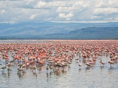 Lake Nakuru National Park, Kenya