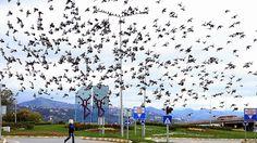 Babasının 20 yıl önce başlattığı her sabah güvercinlere yem verme alışkanlığını 30 yıldır sürdürüyor.