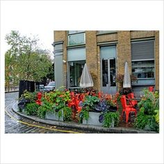 GAP Photos - Garden & Plant Picture Library - Modern planters on pavement containing vegetables and flowers including red and green Cabbages and a grape vine growing in front of cafe, Clerkenwell, London UK - GAP Photos - Specialising in horticultural photography