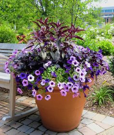 Blues & purples: Persian Shield (strobilanthes), 2 colors of petunia, blackie sweet potato