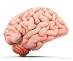 3d realistic detailed brain