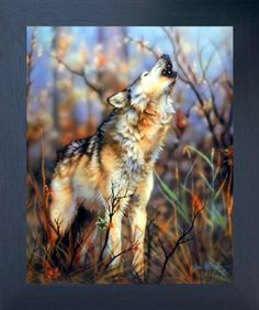 Let the wall of your room reflect your attitude! This grey wolf howling art print framed poster will be an ideal pick for your room. It will speak volumes about your unconventional way of thinking. You'll definitely enjoy viewing this framed art as a part of your home. You'll definitely enjoy viewing this framed art as a part of your home. Its wooden espresso frame accentuates the poster mild tone. The frame is made from solid wood measuring 20x24 inches with a smooth gesso finish.