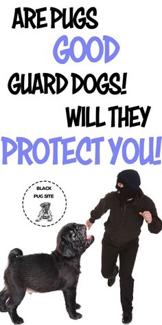 If you're looking for at the best guard dog for your family, I highly recommend some other dog breeds. Pug Facts, Old Pug, Best Guard Dogs, Black Pug Puppies, Fawn Pug, Fawn Colour, Baby Pugs, Different Dogs, Dog Care Tips