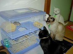 ガン見 : 【閲覧注意】小一時間笑える画像【おもしろ画像】 - NAVER まとめ torture on both sides of the cage