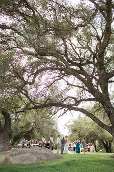 ceremony trees ... beautiful
