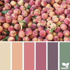 Ooh such a pretty palette! ( { fresh hues } is by . thank you, Sue, for another wonderful Colour Pallette, Colour Schemes, Color Combinations, Paleta Pantone, Color Concept, Palette Design, Design Seeds, World Of Color, Color Swatches