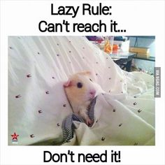 Lazy Rule *happened this early morning
