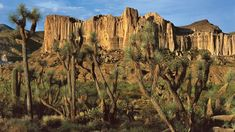 Joshua Trees and towering cliffs abound in the higher elevation deserts in Mohave County and along Joshua Tree Parkway (Hwy from Hoover Dam to Wickenburg. Joshua Tree National Park, National Forest, National Parks, Hoover Dam, Tree Forest, Image House, Travel Usa, State Parks, Places To See