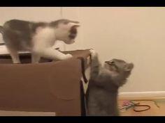 GATITOS BEBES CHISTOSOS ★ GATITOS JUGANDO!!!, Videos de gatos graciosos