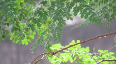 "Photo ""Rain5"" by Scorpio-Mystique"