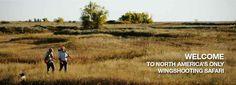 Orvis endorsed wingshooting in Montana, Pheasant Hunting, Bird Hunting, Upland Hunting Pheasant Hunting, Web Design, Graphic Design, Wild Birds, Habitats, Montana, Banners, Sage, North America