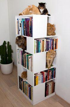 cat bookshelf *