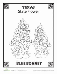 First Grade Nature Places Worksheets: Texas State Flower Adult Coloring Book Pages, Free Printable Coloring Pages, Coloring Sheets, School Week, Summer School, Texas Crafts, Texas History, Schools First, Blue Bonnets