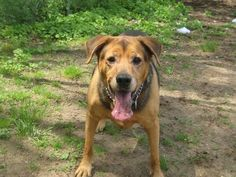 Hi, I'm Coco... do you have a tennis ball for me? I'll play with you! I live in Smithtown, New York, and I'm looking for the perfect home.  http://theshelterpetproject.org/pet?id=26165606